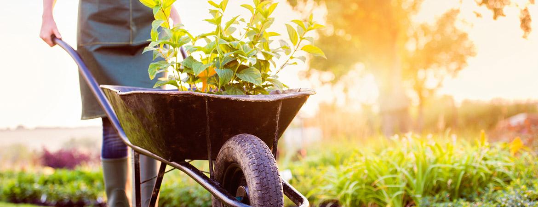 Профессиональный садовник в Москве